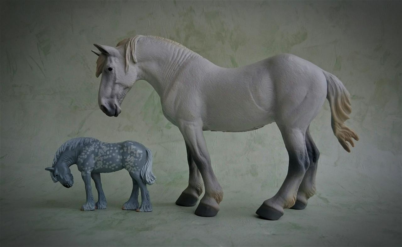Panini - Shire horse - walkaround  20170829_222843