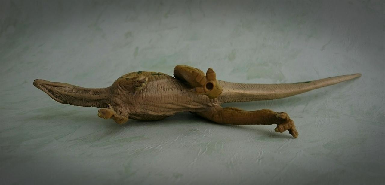 Kinto Favorite - Fukuisaurus - walkaround Image