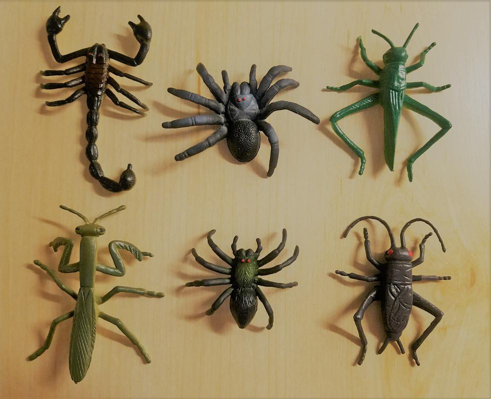 Insect World (Battat Terra) 20180110_173800