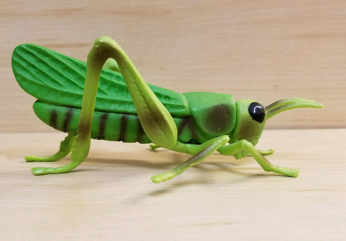 Grasshopper (Bullyland) 20180217_074611