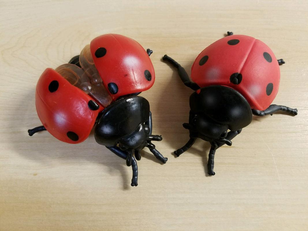 Lady Bug(s) (Bullyland) 20180215_195419