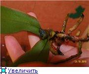 Реанимация орхидей. F3f3b9a7cb1ct