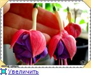 ФУКСИИ В ХАБАРОВСКЕ  - Страница 3 82242f1953bbt