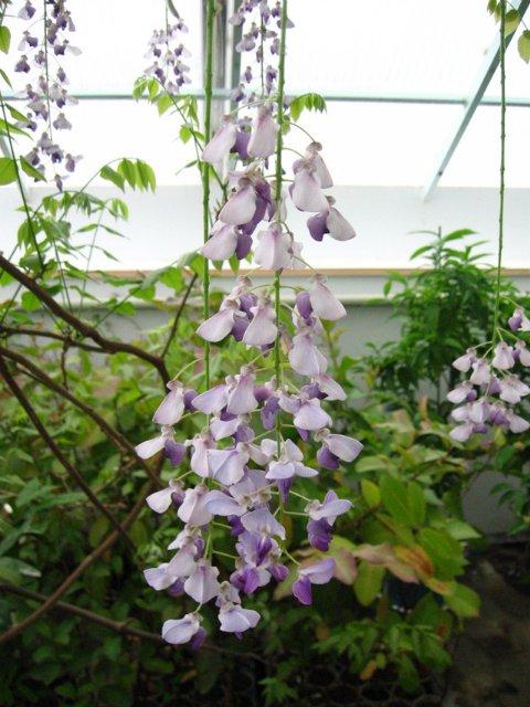 Растения из Нижегородской оранжереи 19b09e28d9b0