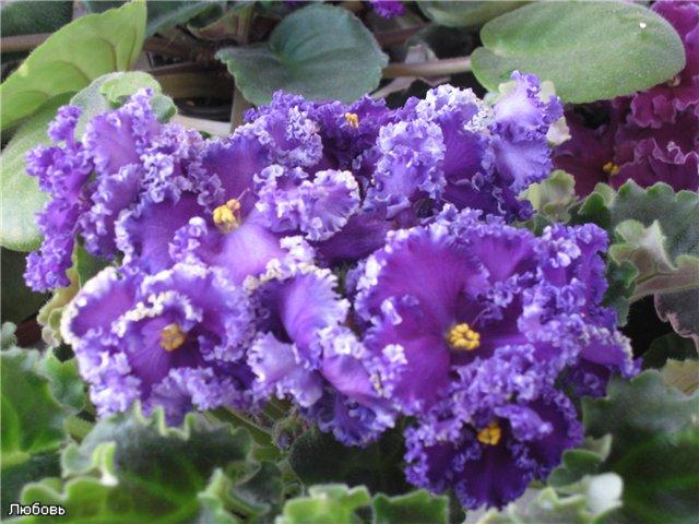 Мои цветики-семицветики - Страница 9 5f9e47368013