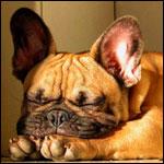 Аватары с животными - Страница 2 1516cd52ee2f