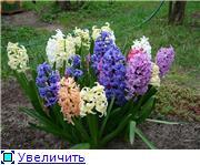 Наши домашние растения - Страница 2 Ad2a7e22a47ct