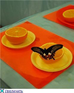 Выставка живых бабочек в Хабаровске. 7350e081268ft