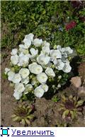 Растения для альпийской горки. 49e6a53dcb19t