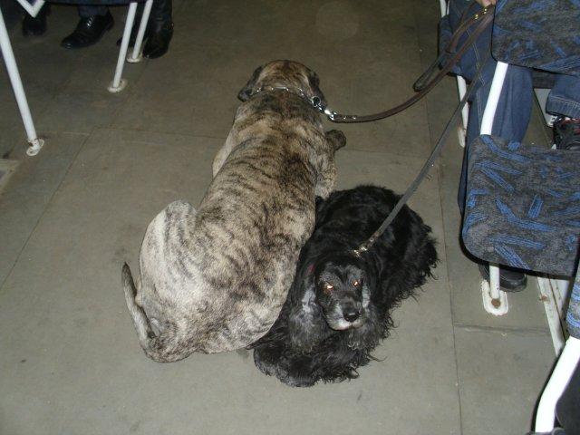 Собаки Татьяны Моисеенковой, кот Мензурка - Страница 3 C46de7d6e672