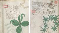 Voynich Manuscript   OHmaQ8A7CwVtclpmAy28