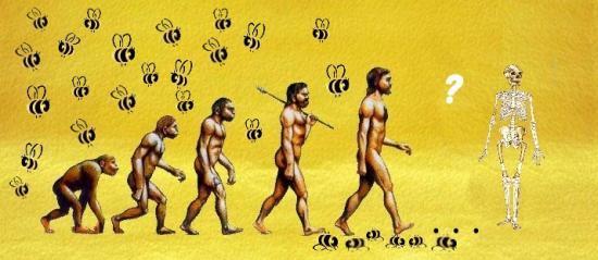 Le mystère de la disparition des abeilles Evolution-de-lhomme