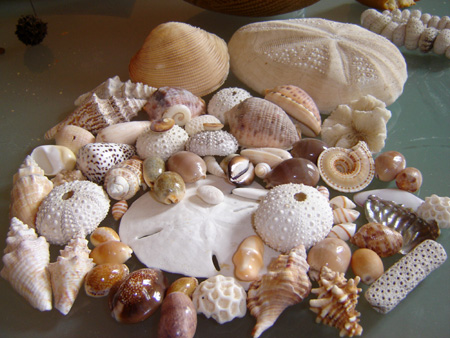 RIMES EN IMAGES - Page 4 Musee-coquillage