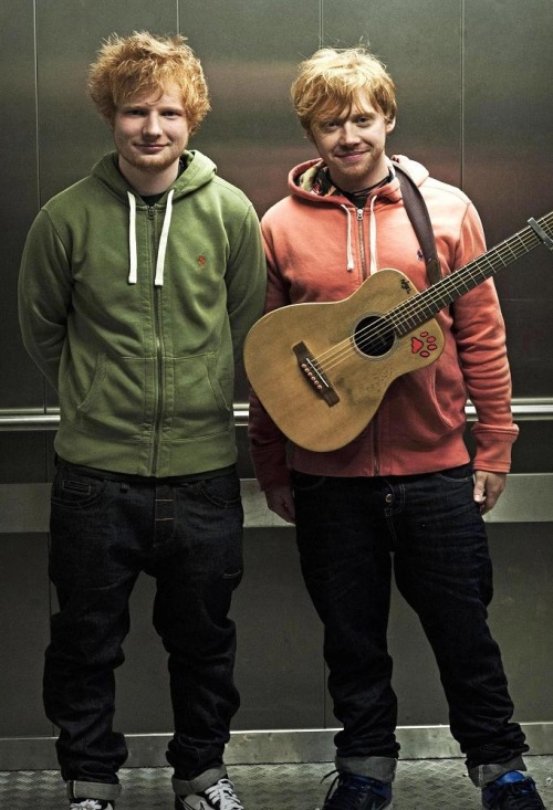 ¿Cuánto mide Ed Sheeran? - Altura - Real height Ed-sheeran-readhead-ron-weasley-rupert-grint-Favim.com-2731523