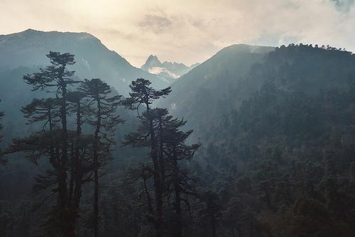 Peisaje... - Page 10 Fog-forest-mist-mountains-photo-Favim.com-254076