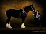 Транспортные средства: лошади, ящеры и т.д. D558da84ca31fc5db2f7168ee832e7e3