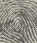 X - WALT DISNEY - One of his fingerprints shows an unusual characteristic! - Page 5 Right_index_whorl