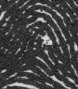 X - WALT DISNEY - One of his fingerprints shows an unusual characteristic! - Page 5 Right_index_whorl_2