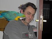 Ara papagaji FrH_J
