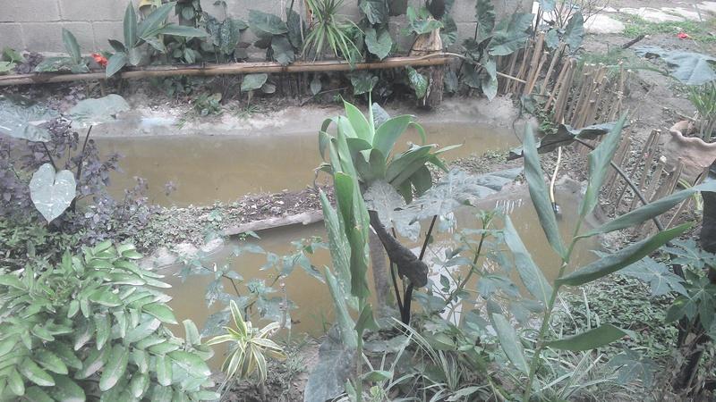 Construindo meu laguinho natural, me diga oque por nele. IMG_20140522_161950_151