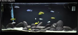 Aquariofilia ligado a educação de Jovens do Ensino Fundamental e Médio. Image