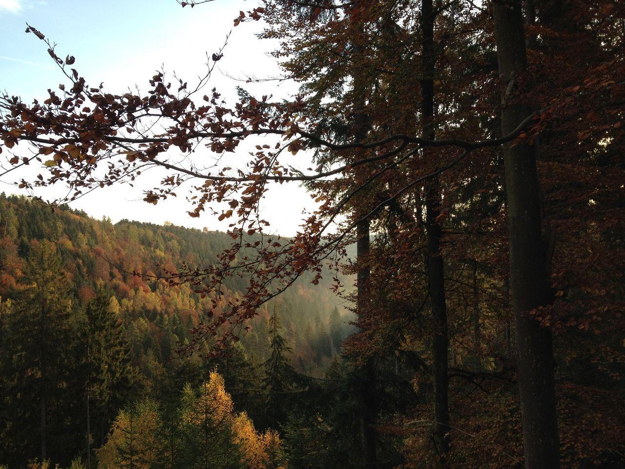 Herbststimmung  IMG_2917