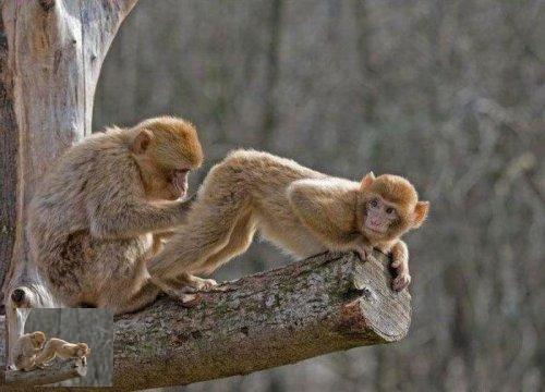 Majmuni - Page 3 K0drivv8k5v