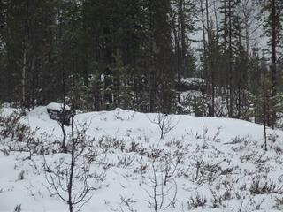 Зимний пейзаж DSCF2539