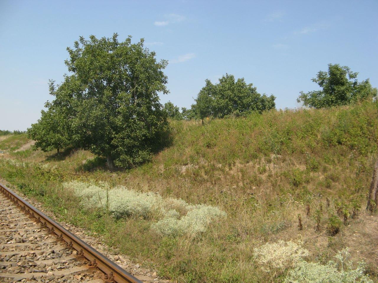 Calea ferată directă Oradea Vest - Episcopia Bihor IMG_0057