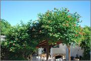 Léto na zahradě DSC_0132