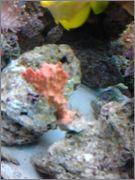 Orange BEE Sponge Unnamed_1