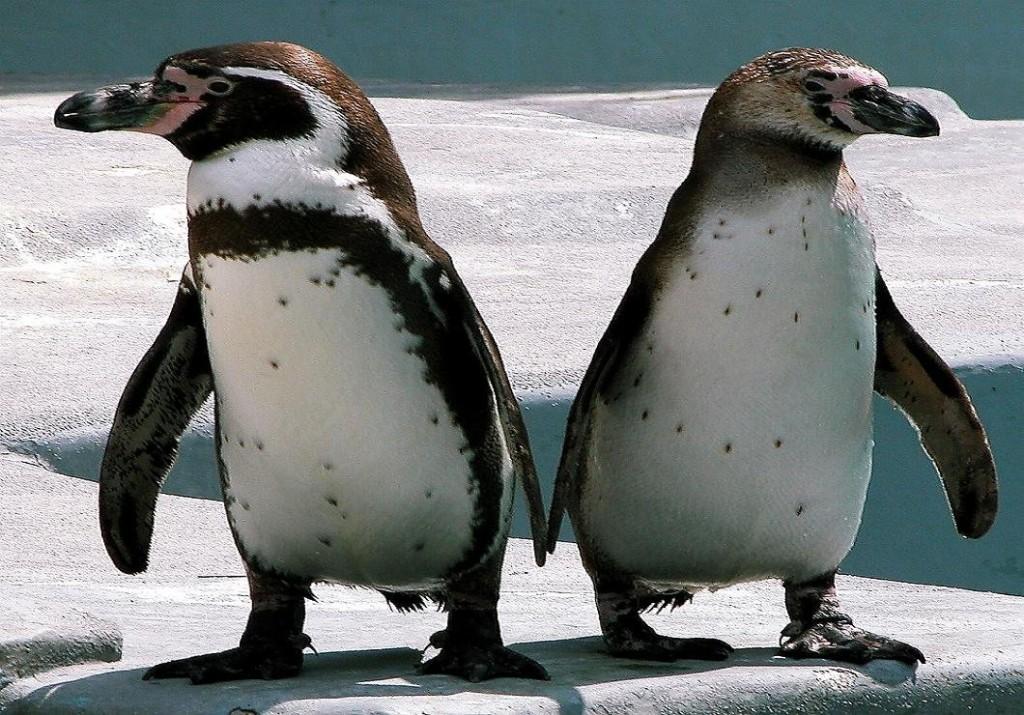 Pingvini - Page 3 16h9v17b34v