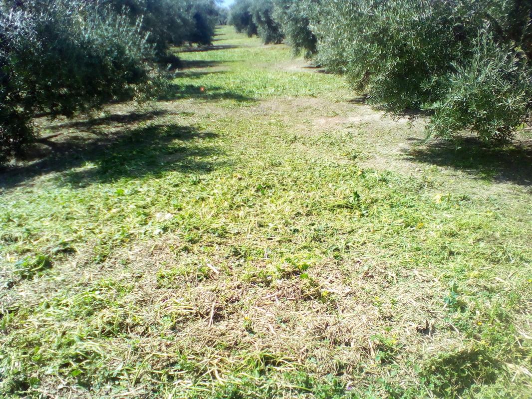 ¿Cómo incrementar el contenido en materia orgánica del suelo? IMG_20170318_125944
