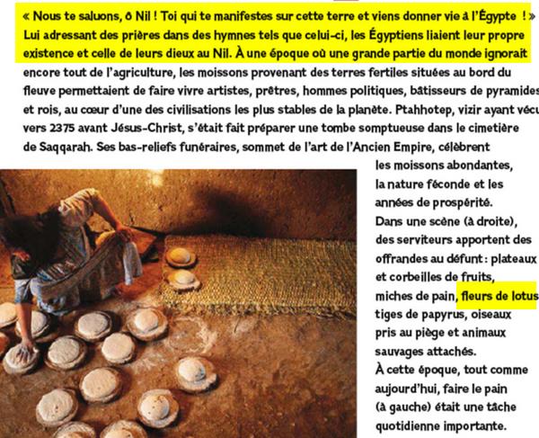 comment l'islam a sauver l'egypte chrétiens coptes de sacrifice des vierges Image