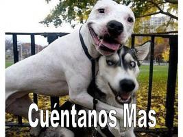 Samples utilizados en canciones de Christina Thump_6599646cuentanos-mas