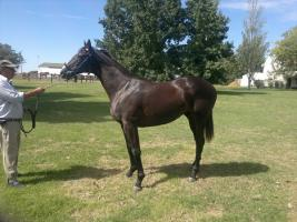 REMATE 05 DE ABRIL - PRODUCTO 2011- SAN LORENZO DE ARECO - RACE HORSES Thump_8330892invisible1