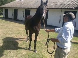 REMATE 05 DE ABRIL - PRODUCTO 2011- SAN LORENZO DE ARECO - RACE HORSES Thump_8330895invisible2