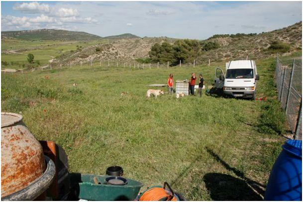 Neue Auffangstation....Tiere in Spanien 4381389