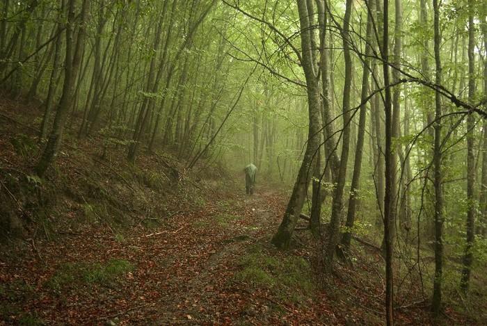 ... Y caen las hojas, llega ....¡¡¡ EL Otoño !!! 1577369