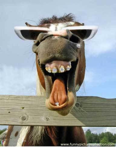 Καλπάκι 3 Νοεμβρίου 1940 - Σελίδα 5 Funny_donkey03_normal2