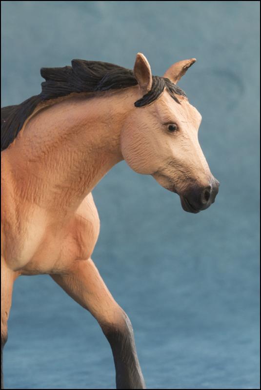 The MOJO FUN 2012 Buckskin Quarter horse walkaround by Kikimalou Buckskin_Quarter_horse_12