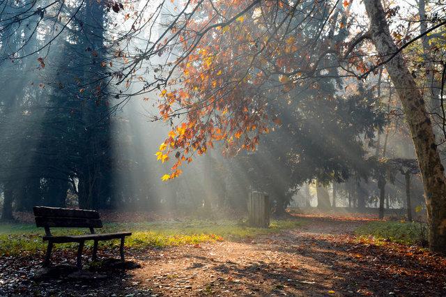 klupa nekoga čeka - Page 6 159580_nature_fall_park_bench_the_light_rays_p