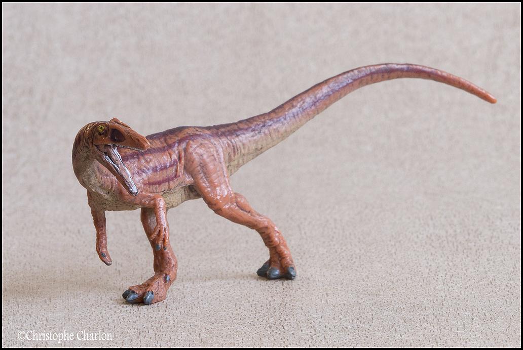 "Kinto Favorite ""Redondasaurus vs Coelophysis"" set walkaround by Kikimalou Kinto_favorite_Fukui_Museum_Coelophysis_6"