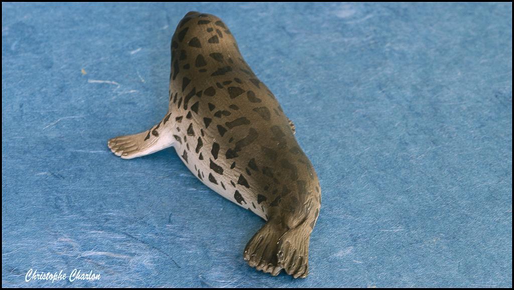 Eikoh 'Miniatureplanet' Spotted seal walkaround  Eikoh_Spotted_seal_10