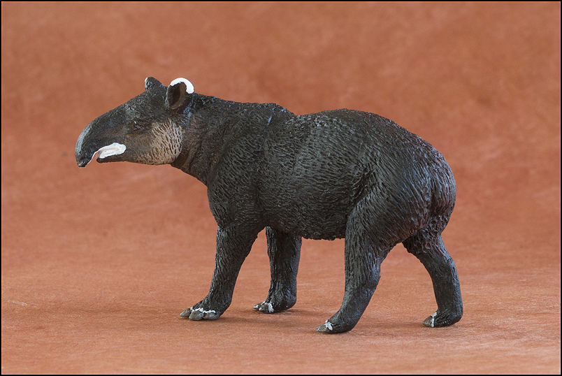 Ana's mountain tapir : A walkaround by Kikimalou Mountaintapir_DOBROWOSLKA-4.jpg_original