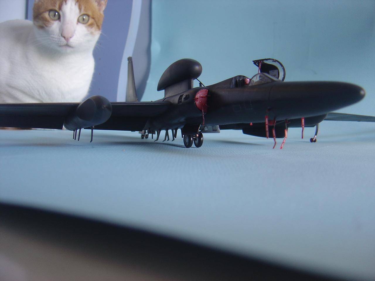 U-2  (οχι το συγκροτημα ρεεε...) R  Senior Span. - Σελίδα 3 DSC02904