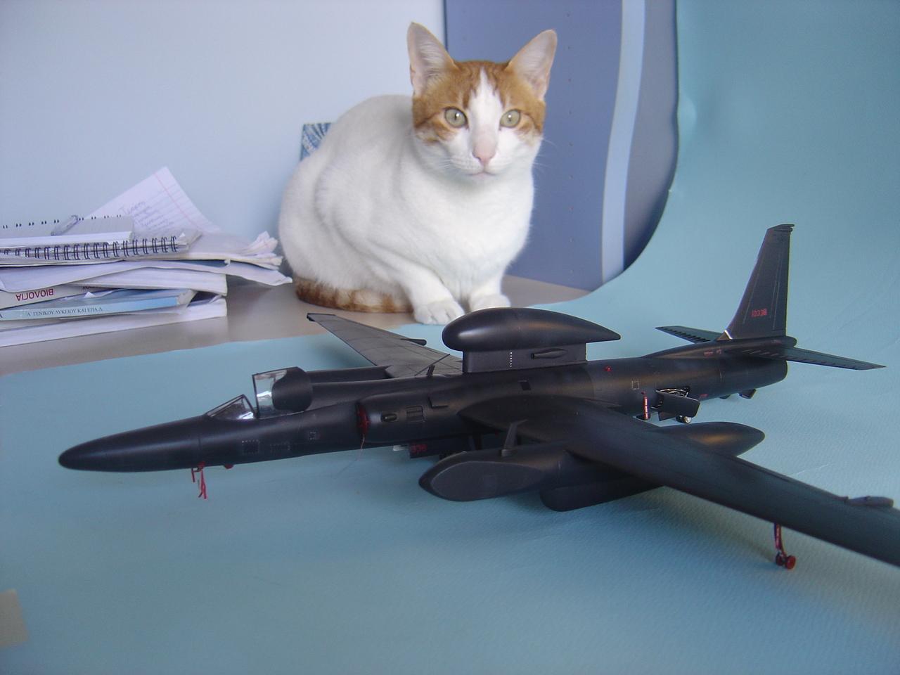 U-2  (οχι το συγκροτημα ρεεε...) R  Senior Span. - Σελίδα 3 DSC02899