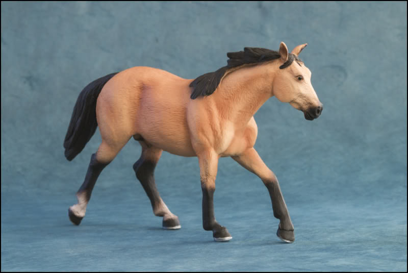 The MOJO FUN 2012 Buckskin Quarter horse walkaround by Kikimalou Buckskin_Quarter_horse_5