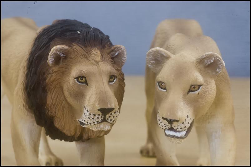 MOJO : The lions family walkaround review by Kikimalou DSC_-1957