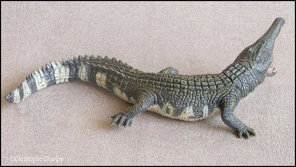 "Kinto Favorite ""Redondasaurus vs Coelophysis"" set walkaround by Kikimalou Kinto_favorite_Fukui_Museum_Redondasaurus_1"